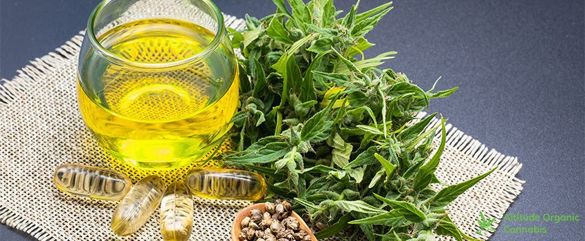 CBD for Hair Care Benefits and Tips