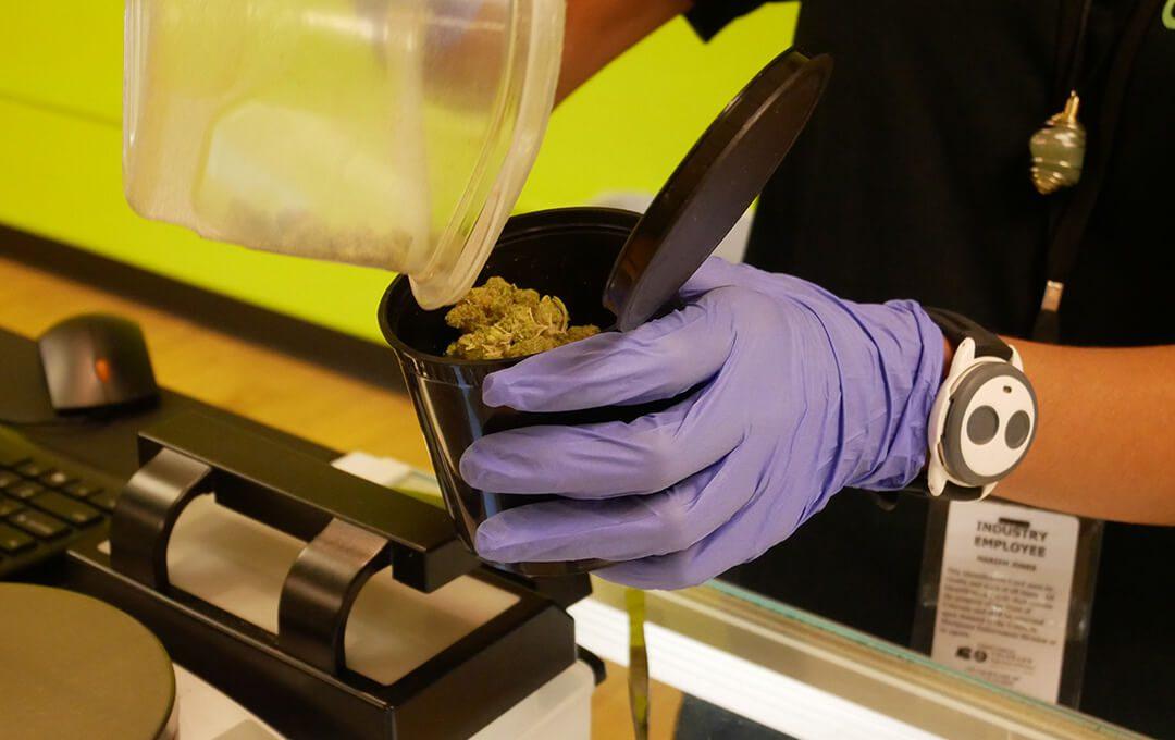 AOC Preparing Cannabis for Weighing